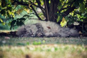 My Lovely Cat by Alexkid44