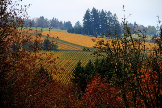 Oregon Wine Country by WinDrift