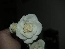 roses aggain by Irie-Stock