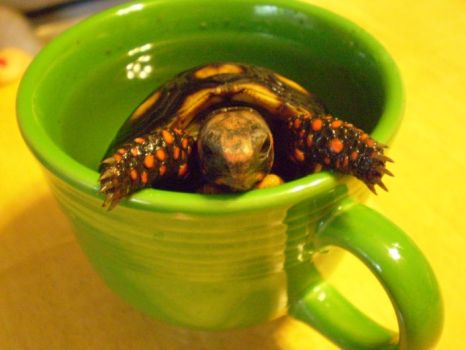 Tea Time for Tortoise by Lunerith
