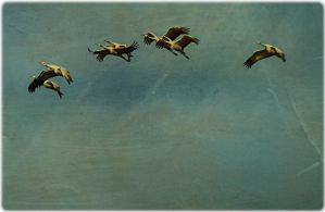 Off To Roost by JillAuville