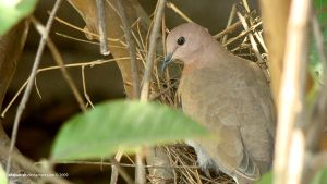 Dove by IshqAatish