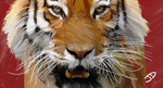 Eye of the Tiger by rduncan20