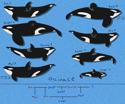 Sea Life Park Miami Orca Pod by orcinace