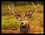 Stag 2 by rosie-a-g