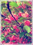 Blossoming apple tree-2 by SteelNat
