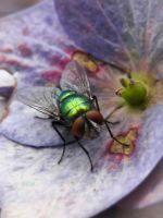 Green Fly by iriscup