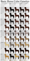 Basic Horse Color Genetics Chart by Echodus