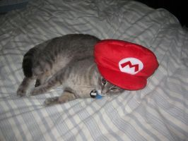 My Kitty in a Mario Hat by TimmCosplay