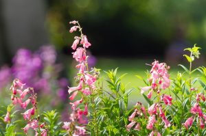 Flowers of Summer by ARC-Photographic
