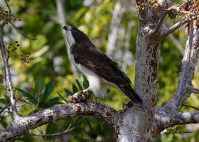 Hawk with lunch by DGAnder
