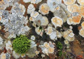 Abstract fungi on rock by MBKKR