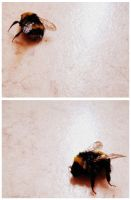 I love bumblebees by NienorGreenfield