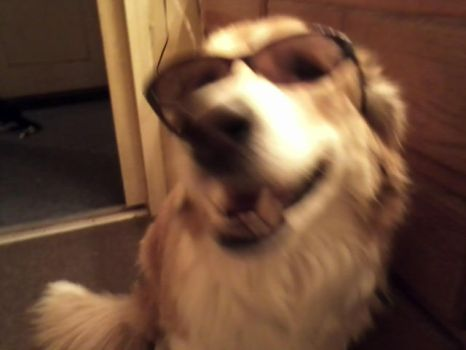 My dog Skeeter. Its blurry. by Iloveyoumanlol