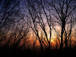 Sunset and trees by fu-bu
