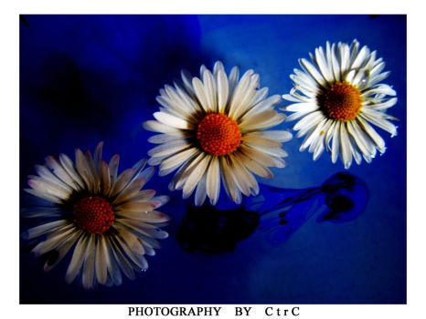 InK Of 3 Flowers by ctrc