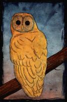 Northern owl by Echoes83