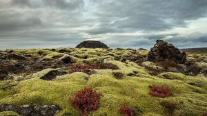 Moss covered by axelrafn