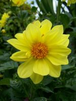 Stock Yellow Flower by Sheiabah-Stock
