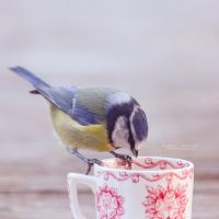 Teatime for birds by FreyaPhotos