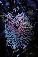 Iridescent Web by Questavia by Questavia