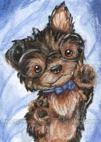 Nerdy Cute - Yorkshire Terrier by sobeyondthis