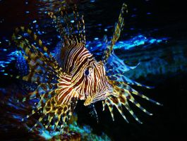 lion fish by scarlette13