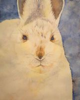 Snowshoe Hare by seadworp