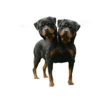 Orthus Two Headed Dog PNG Vampstock by VAMPSTOCK