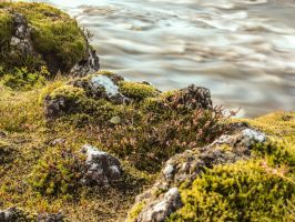 Moss by the river by axelrafn