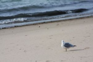 Lone Seagull by ohmissemily