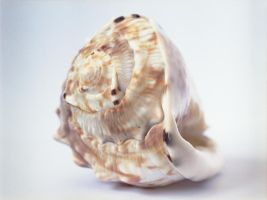 Shell by WillJH