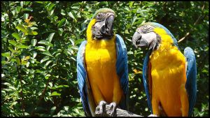 Parrots by ospr