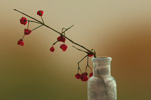 Flowers in a Vase by Whispyyr