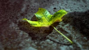 Leaf Wallpaper 2560x1440 by LenzKist74