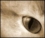 Cat eye by Atilla1000