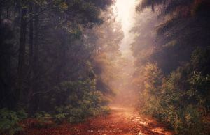 Into the Fall by Miguel-Santos