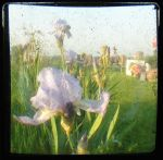 Iris TTV by angelandspot