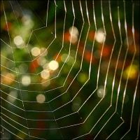 web and lights by SvitakovaEva