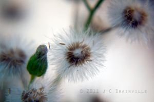 Weeds and Seeds by jdrainville
