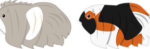 Guinea Pig Adopts by demonreapergirl