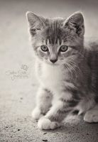 Crazy Kitty II BW by CandiceSmithPhoto