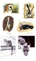 . Animals sketchdump . by Maiwenn