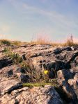Last flower on Earth by masloo