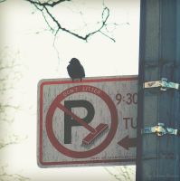 No Parking by Littography