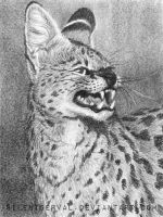 Serval in pencil by SilentServal