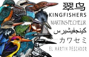 Kingfisher Collage by rogerdhall