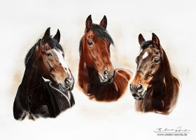 Horseportraits by AtelierArends