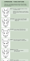 EXPRESSIONS: 7 BASIC EMOTIONS by Snowback