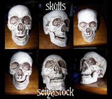Skull Stock by seiyastock